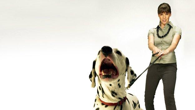 Dog Training Shows